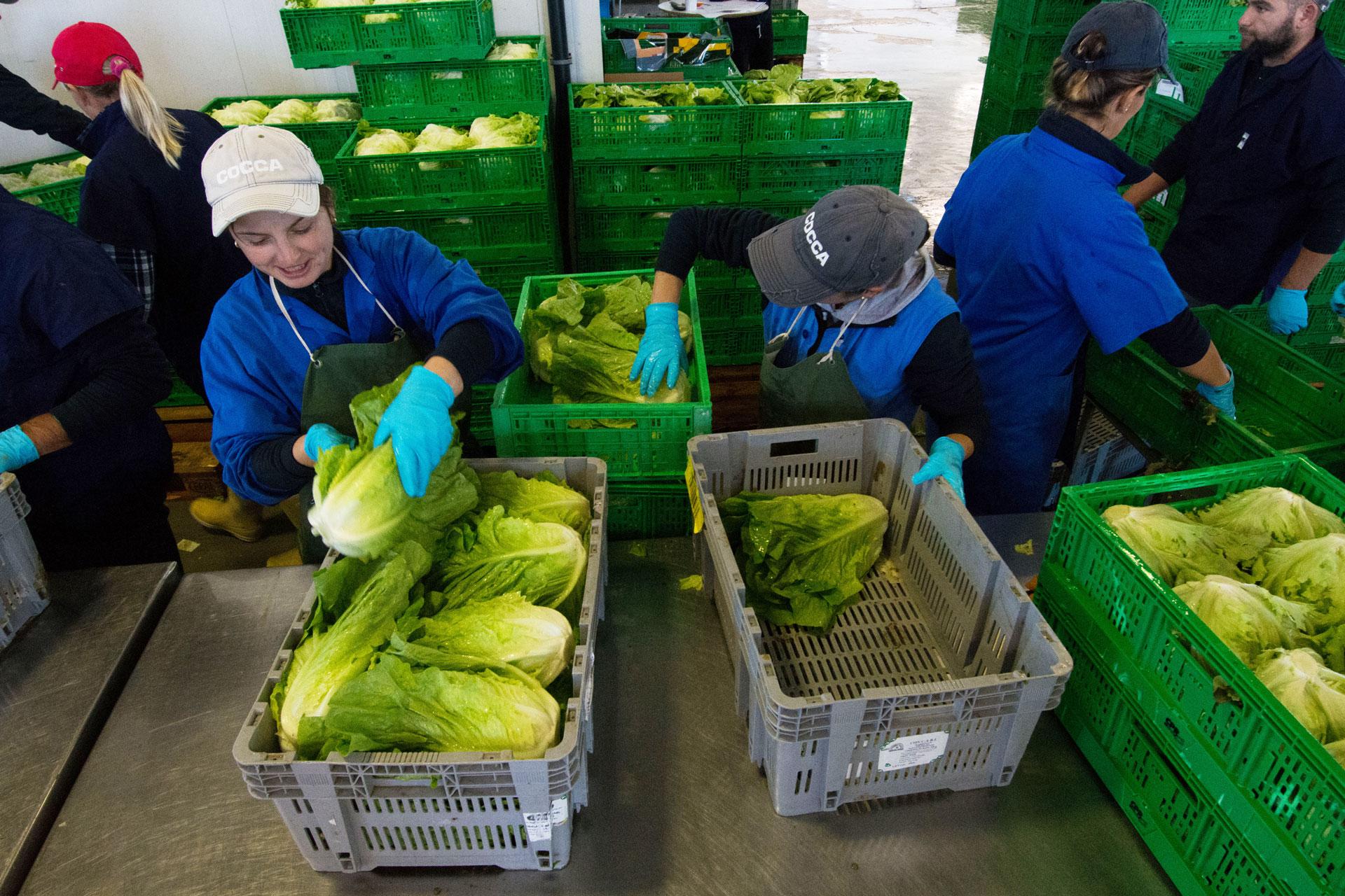 Azienda-agricola-emilio-cocca-confezioanemento