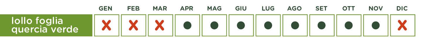 lollo quercia verde-tabella